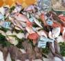 pescato pesce