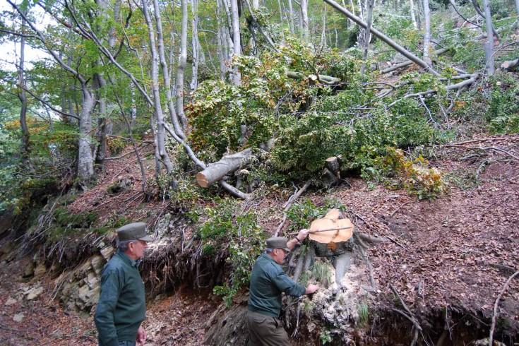 Parco del Cilento: denunciate due persone per disboscamento selvaggio - aSalerno.it
