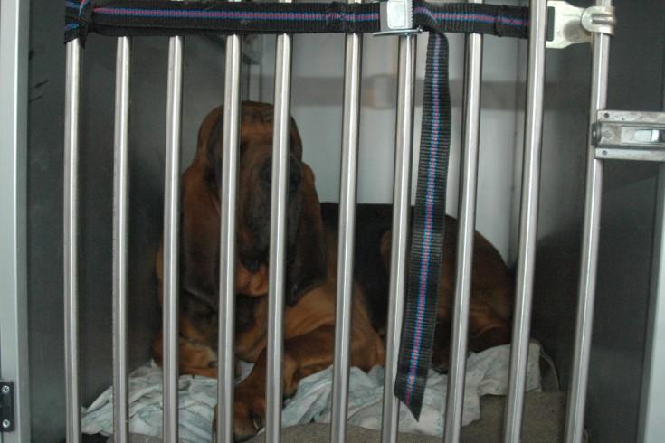 Pontecagnano, cane agli arresti domiciliari - aSalerno.it