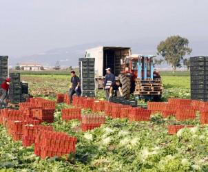 immigrati agricoltura campi