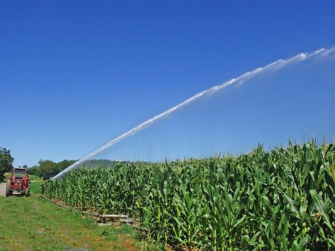 Fibra ottica per l'irrigazione in agricoltura - aSalerno.it