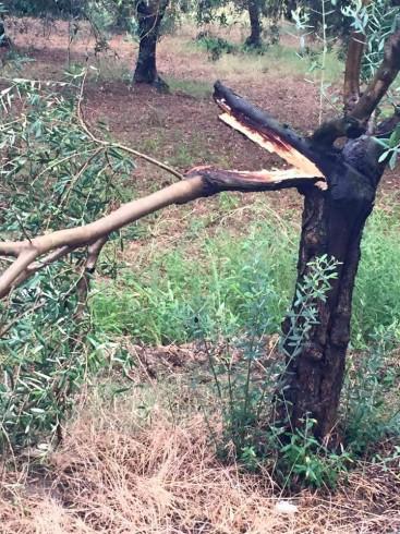 Eboli, fulmine si scarica un albero - aSalerno.it