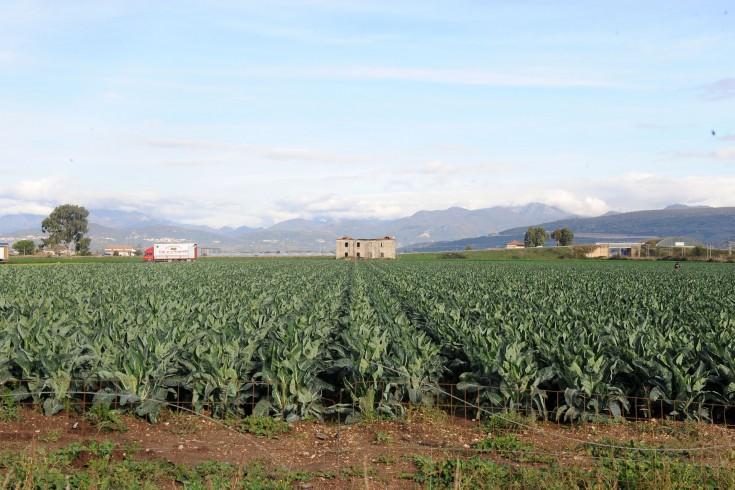 Coronavirus, agricoltura salernitana in affanno - aSalerno.it