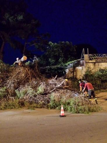 Battipaglia: albero crollato nella zona di Lido Lago - aSalerno.it