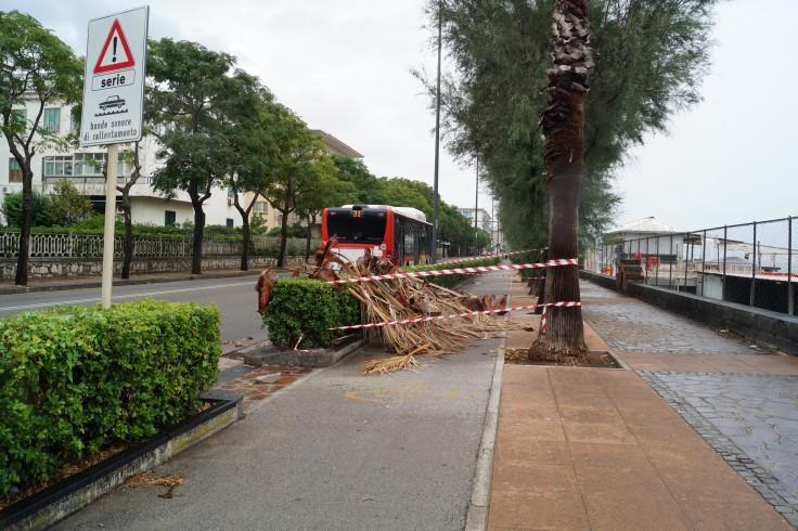 Maltempo, alberi spezzati nella zona orientale - aSalerno.it