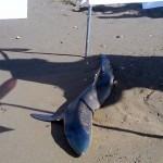 squalo 5