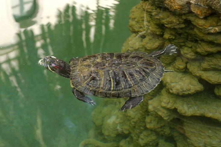 Camerota, un piccolo nido per 54 baby tartarughe - aSalerno.it