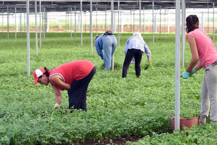 Caporalato, 15mila lavoratori in condizioni di sfruttamento - aSalerno.it