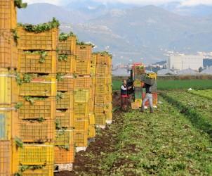 sal : agricoltura