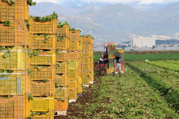 Maltempo, i danni maggiori sono per l'agricoltura - aSalerno.it