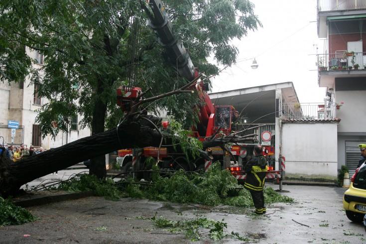 Pellezzano, crolla un albero sul Palazzetto dello sport - aSalerno.it