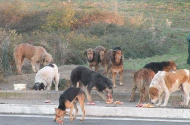 Eboli: cani avvelenati per strada, scatta l'allarme sui social - aSalerno.it