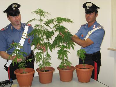 Trovato in casa con 67 piante di cannabis, arrestato giovane - aSalerno.it