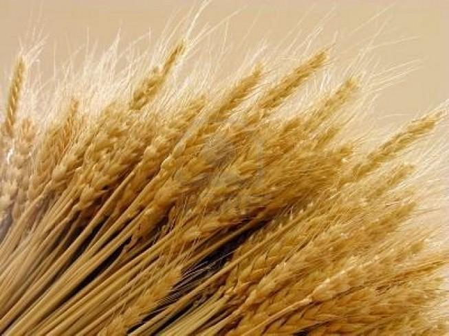 Un premio di poesia per celebrare il biscotto di grano - aSalerno.it