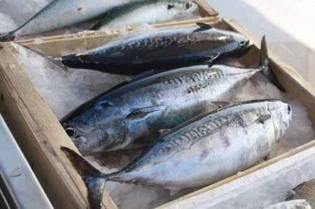 Pollica: pesca illegale, denunciato il figlio dell'ex sindaco Vassallo - aSalerno.it
