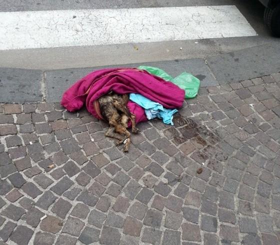 Cane trovato senza vita a pochi metri dal Comune di Salerno - aSalerno.it