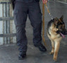 Controlli Forze dell'Ordine presso la Stazione di Salerno.