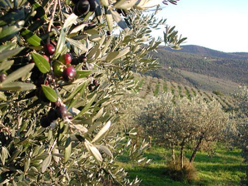 """Coldiretti Salerno: """"A disposizione i terreni per messe e lezioni all'aperto"""" - aSalerno.it"""
