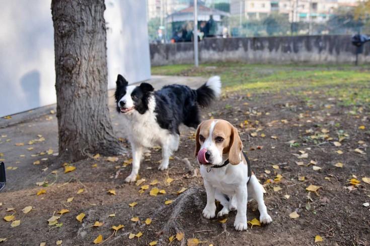"""Cani avvelenati a San Cipriano Picentino, la denuncia del comitato """"Uniti per Chicca"""" - aSalerno.it"""
