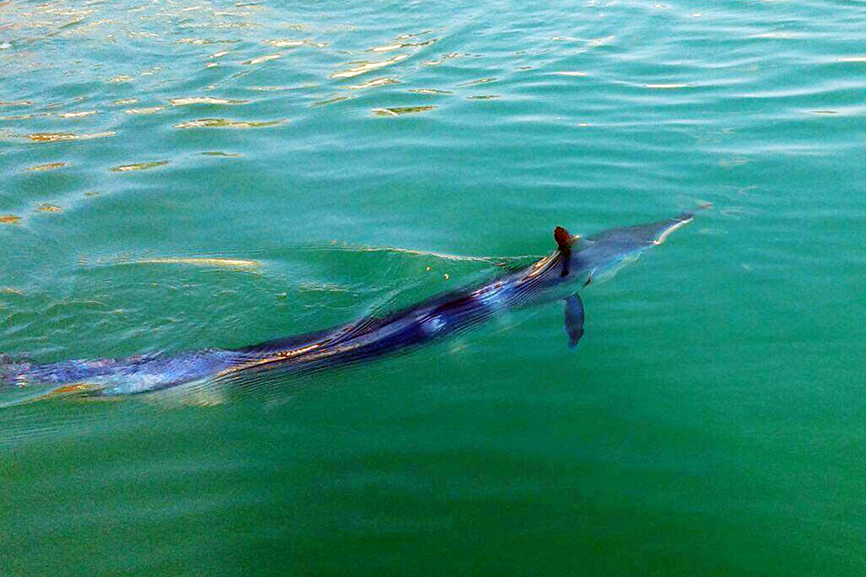 Le foto aguglia imperiale nelle acque di santa teresa for Un pesce allevato in acque stagnanti