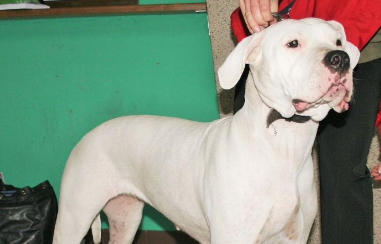 """Amalfi: """"terapia comportamentale per il cane e corso per il padrone"""" - aSalerno.it"""