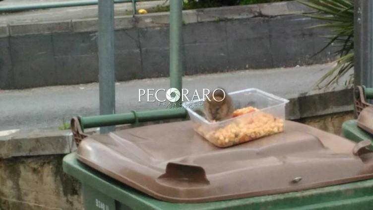 """Topi a Salerno, il sindaco scrive all'Asl: """"Siamo in emergenza, serve un piano straordinario"""" - aSalerno.it"""