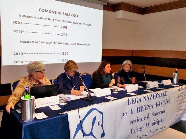 Gestione dei canili di Salerno: tutta la questione legata al bando - aSalerno.it