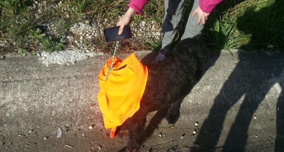 Un automobilista investe un cane sull'A3 e fugge senza lasciare tracce - aSalerno.it