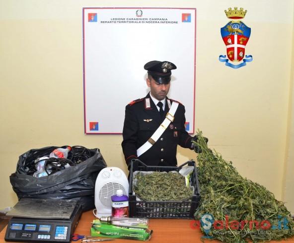 Nocera Inferiore, due arresti per coltivazione di marijuana - aSalerno.it