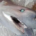 squalo 03