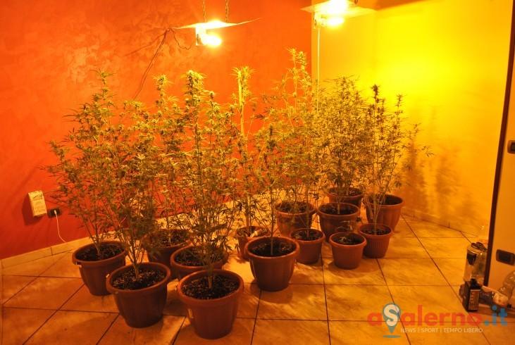 Salerno, sequestrate 14 piante di marijuana: denunciato 36enne - aSalerno.it