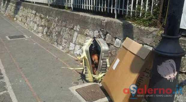 Rottweiler morto sigillato in un trolley tra i rifiuti, orrore a Nocera Inferiore - aSalerno.it