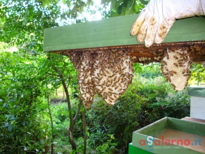Camerota, scopre in casa uno sciame d'api e 12 chili di miele - aSalerno.it