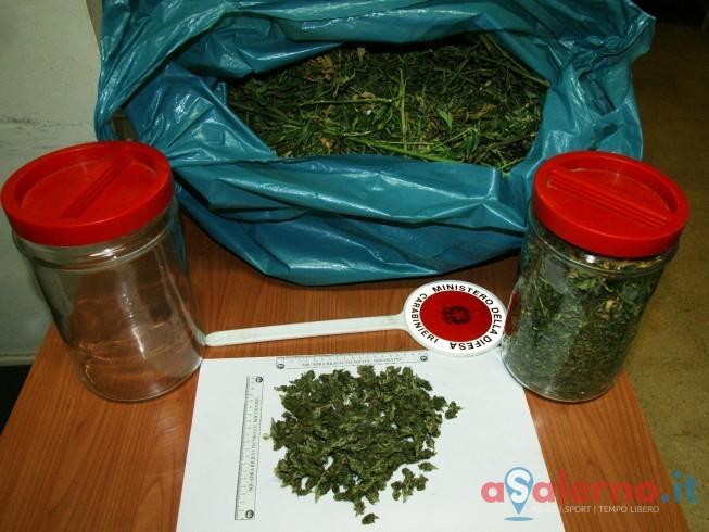 Carabinieri scoprono piantagione di marijuana a Pagani: 50 piante alte 2 metri - aSalerno.it