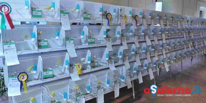 Gran successo per la tre giorni di Mostra Ornitologica Internazionale a Salerno - aSalerno.it