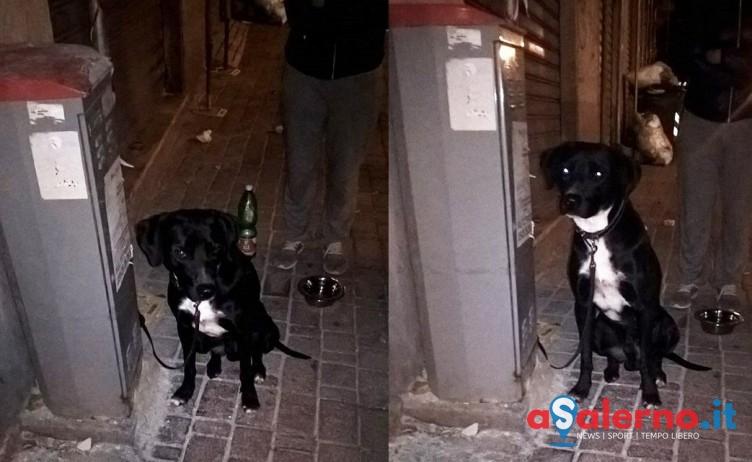 FOTO – Cane legato e abbandonato in via Settimio Mobilio - aSalerno.it