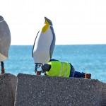 Pinguini (2)
