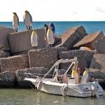 Pinguini (4)