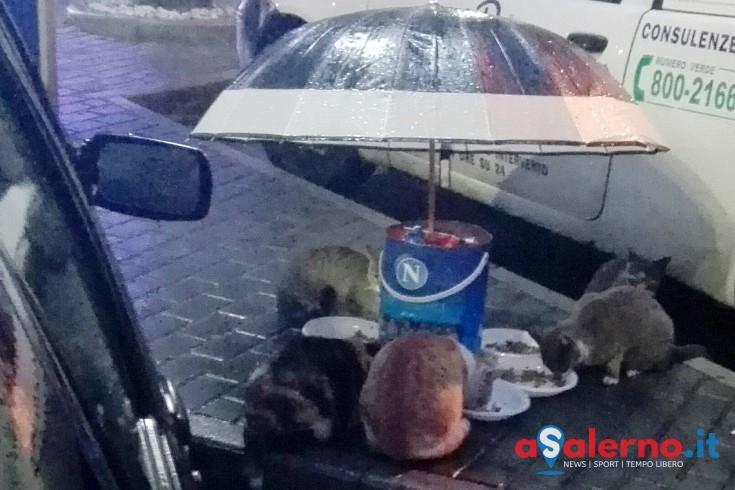 FOTO – A Pagani l'invenzione che salva i gatti randagi - aSalerno.it