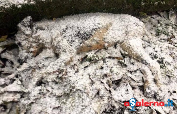 Abbandonata muore sotto la neve, diventa virale la foto di una cagnolina nel Salernitano - aSalerno.it