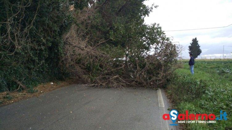 Incidente sulla provinciale tra Bellizzi e Corno d'Oro, cade albero su un furgone – FOTO - aSalerno.it