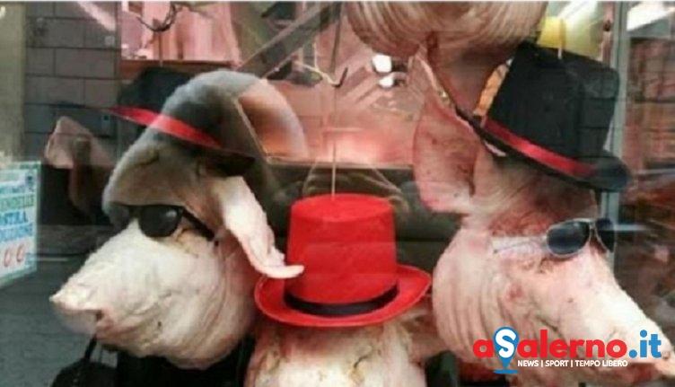 """Maiali """"decorati"""", polemica sulla vetrina di un macellaio di Fratte – FOTO - aSalerno.it"""