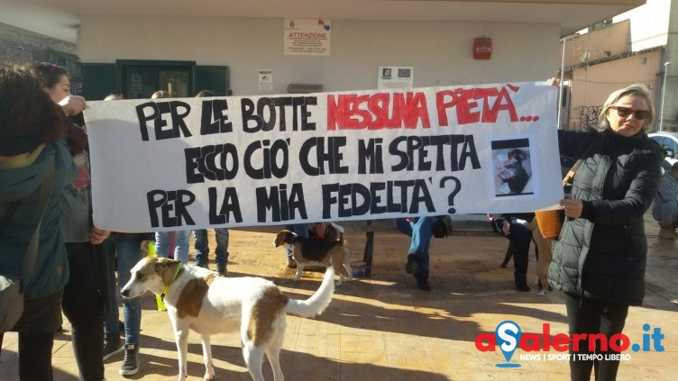 La Questura ha deciso: sì al presidio degli animalisti ma lontani dalla casa dell'assassino - aSalerno.it