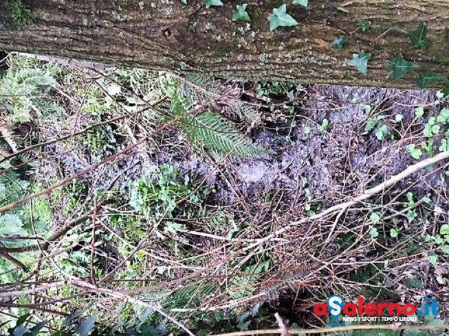 Scarichi fognari abusivi nel fiume Irno, scoperti due residenti di Sava – FOTO - aSalerno.it