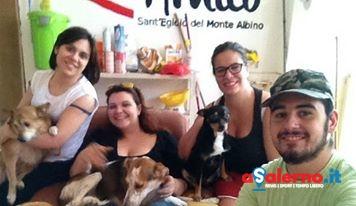 Una Zampa per amico: domenica sfilata canina a Sant'Egidio - aSalerno.it