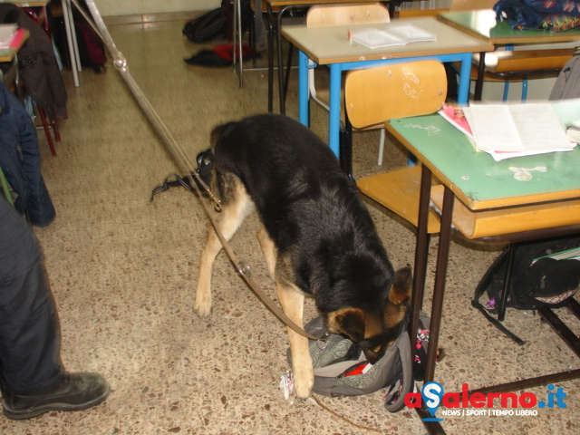 Blitz nelle scuole di Salerno: studente minorenne scoperto dai cani con l'hashish - aSalerno.it