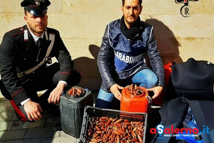 Nascondeva in auto 40kg di datteri di mare, fermato dai carabinieri - aSalerno.it