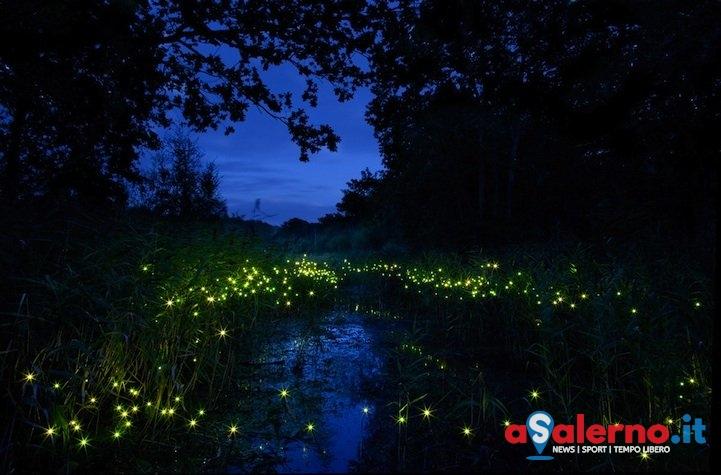 Alla riscoperta delle lucciole lungo le sponde del fiume Sele - aSalerno.it