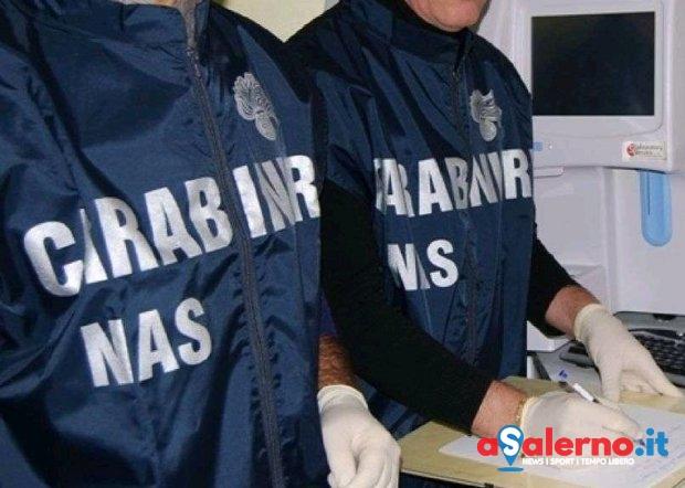 Smaltivano le carcasse di cani deceduti, sequestrato inceneritore dai Nas - aSalerno.it