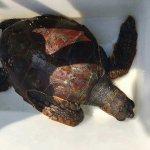 tartaruga Scario1